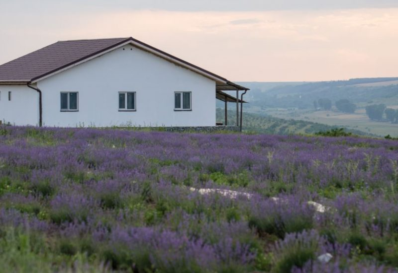 farmhous from lavender field